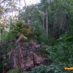 Бамбук в природе. Тайланд