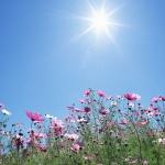 Как защитить растения от солнца