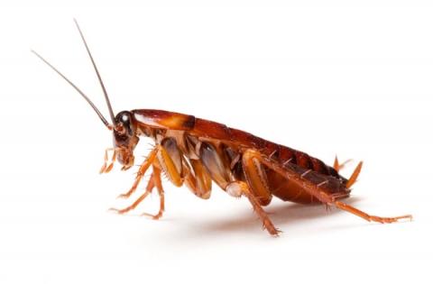 Как избавится от тараканов